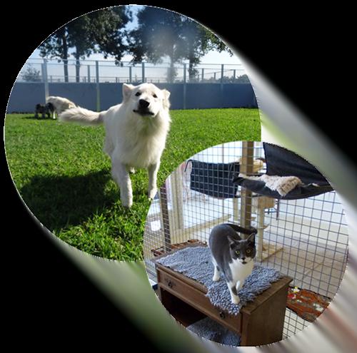 Hond- en katverblijf
