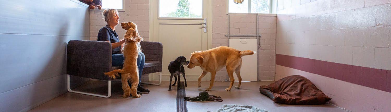 Hondenpension Achteraf