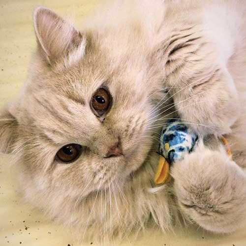 Katten pension
