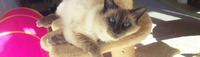Kattenverblijf Berlicum