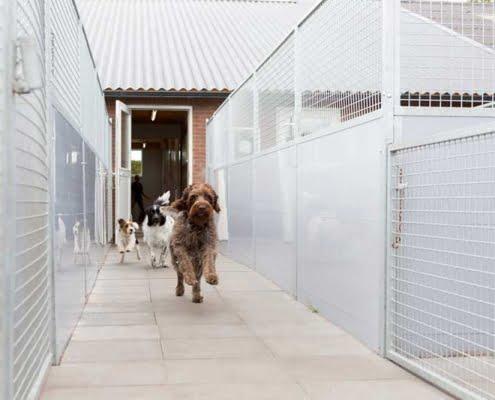 Hondenpension verblijven