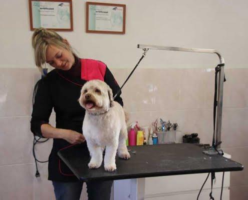 Honden trimmen